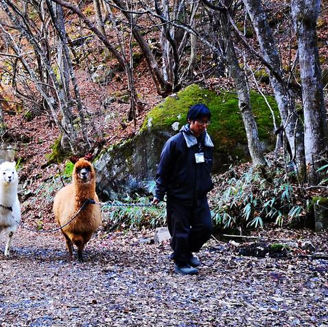 横谷峡散策路をお散歩