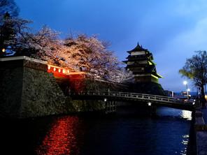 諏訪・高島城の桜ほぼ満開!