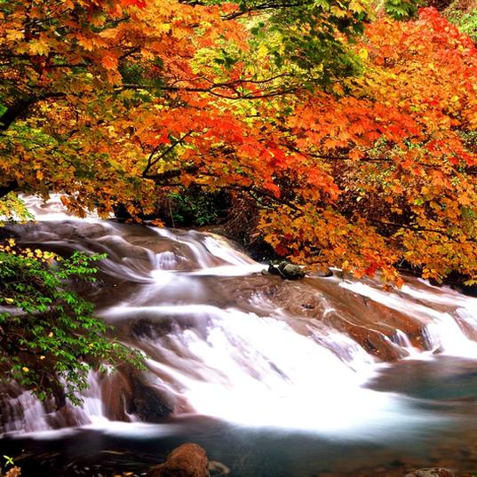紅葉の横谷渓谷一枚岩