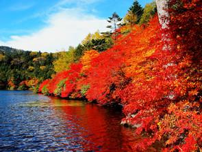 白駒池の紅葉が見頃です