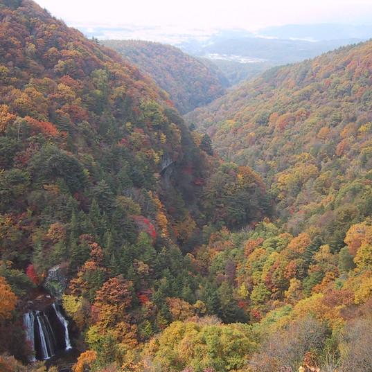 横谷渓谷の紅葉を横谷観音展望台から