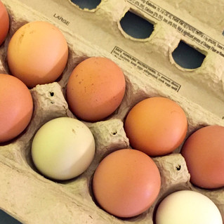 Introducing our new Egg CSA program