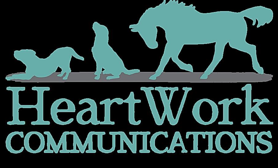dog, pet, horse, pit bull, labrador, thorougbred, creative, design,communications