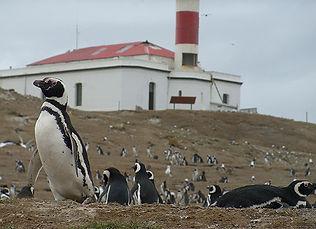 35_26_pinguinos_isla_magdalena_02.jpg