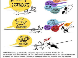 Spacial Awareness: Not All Dogs Like Being Sniffed by Strangers