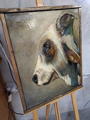 Brahman bull with a smirk