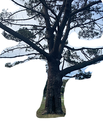 TREE 003.png