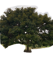 TREE 008.png