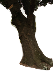 TREE 005.png