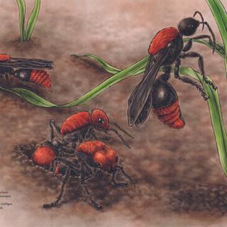 Ameisen-Wespen