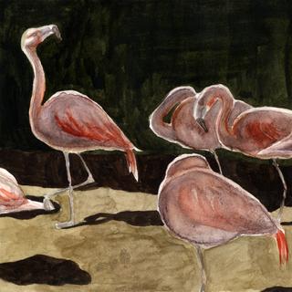 Zoo-Zeichnungen
