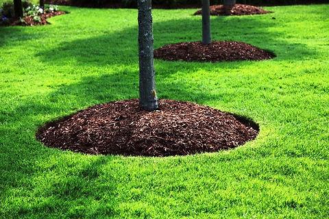 Mulching-around-trees.jpg