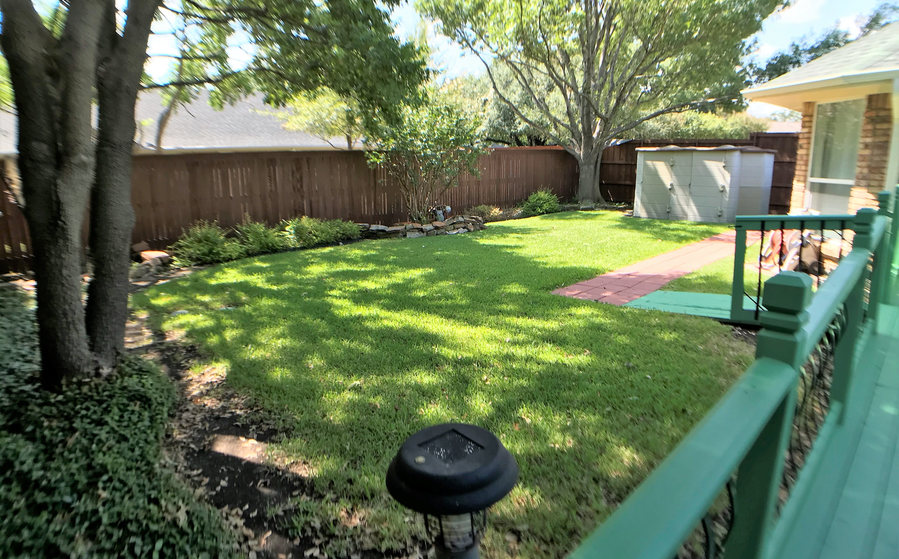 backyard grass.jpeg