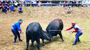 牛突き 令和4年開催予定