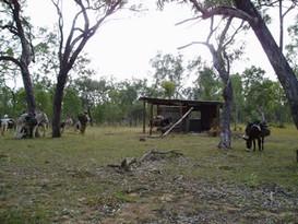 Camp Dirtywash Creek