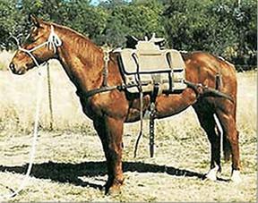 Queensland Style Australian packsaddle