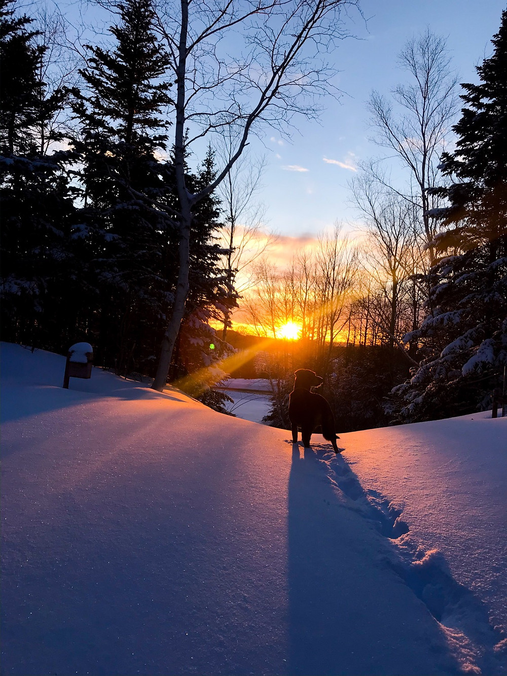 A dog in snow and a sunset