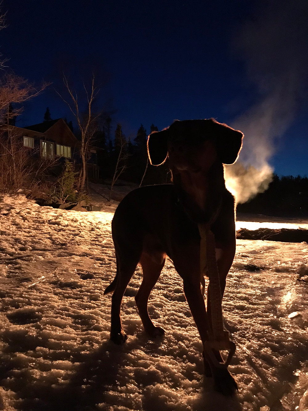 Duke the dog standing in front of a fire on a cold evening at the diy cabin