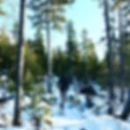 Weekends in the woods 😊🌲🐾🐕.jpg