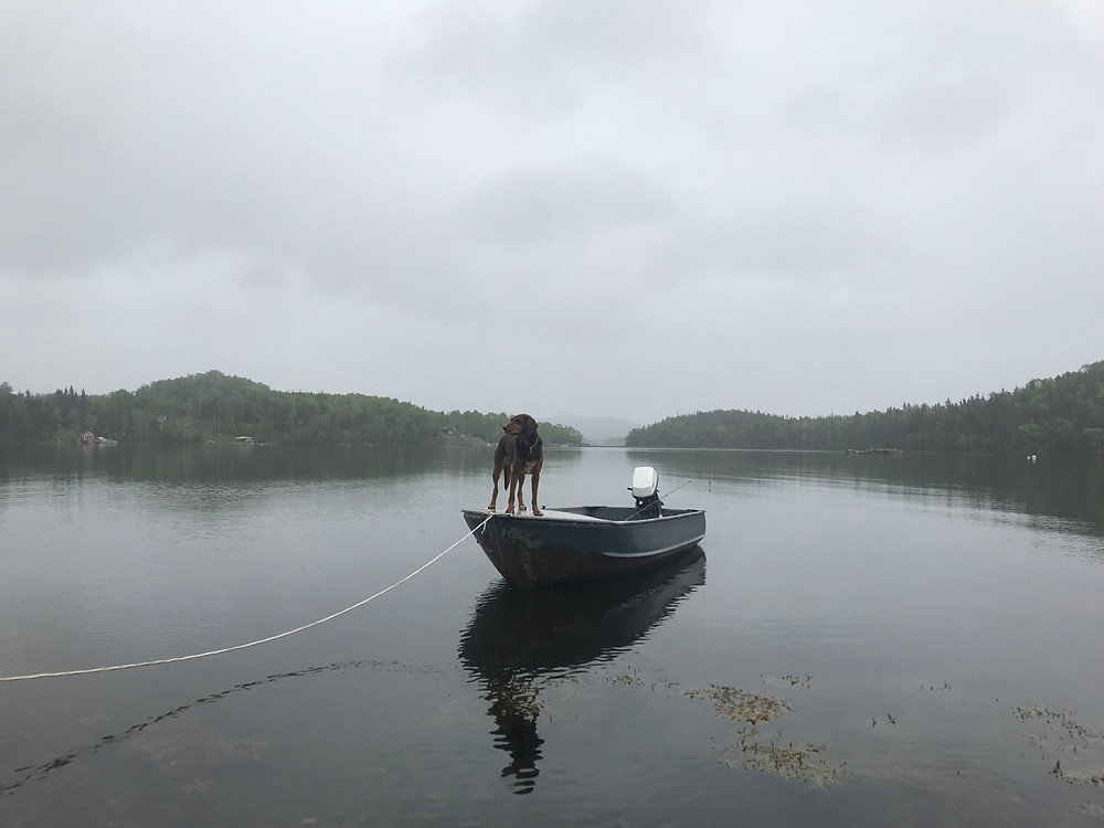 Duke standing on our 14' aluminum boat, tied off in the harbor