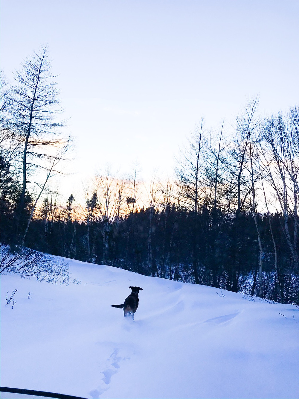 Duke breaks a trail in snow out running the skidoo