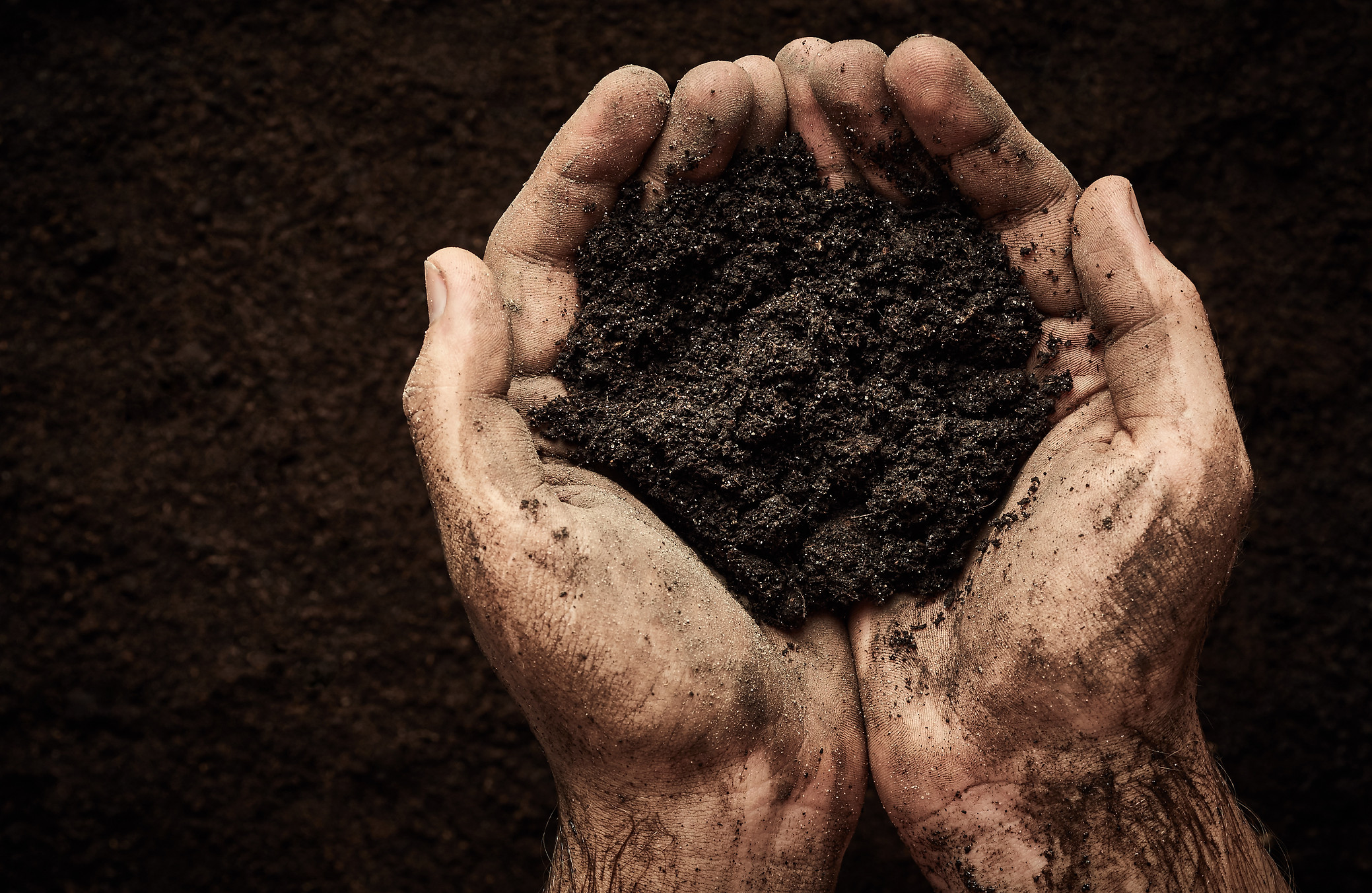 Soil in male hands.jpg