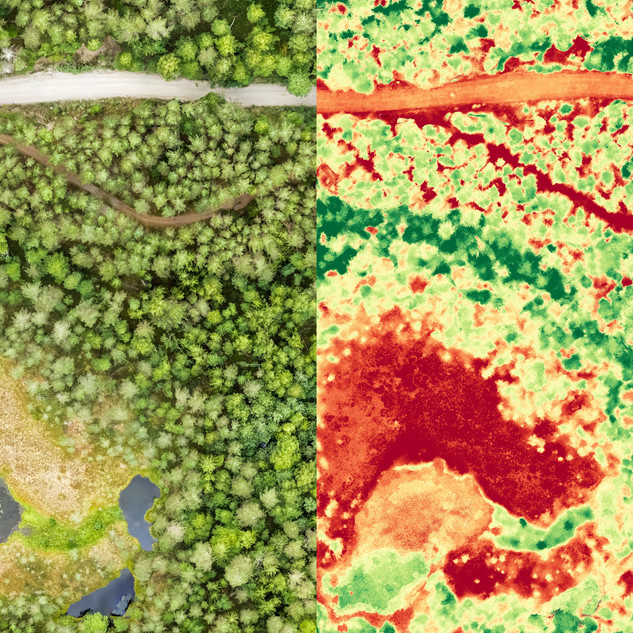 Parallel view of aerial orthomosaic and
