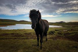 Francesca Parolin | Islanda