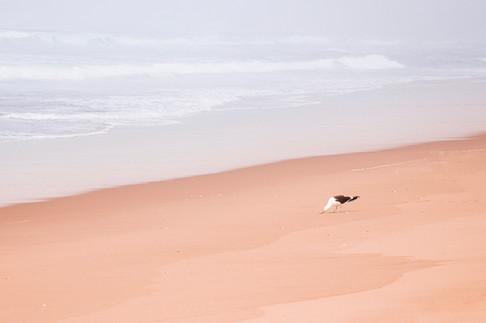 spiaggia_01.JPG