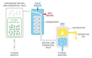 diagram: how terpene extraction works