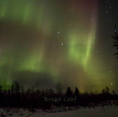 Beaver dam norther lights.jpg