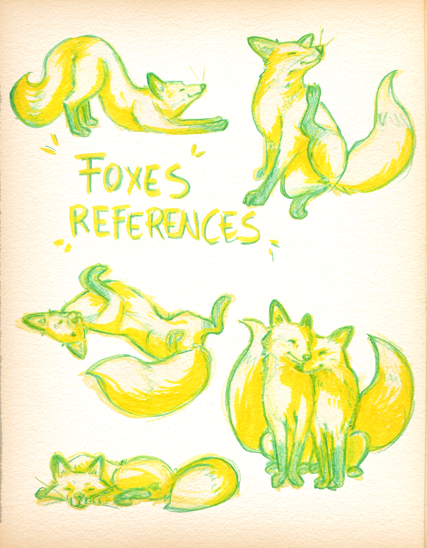 1.foxes