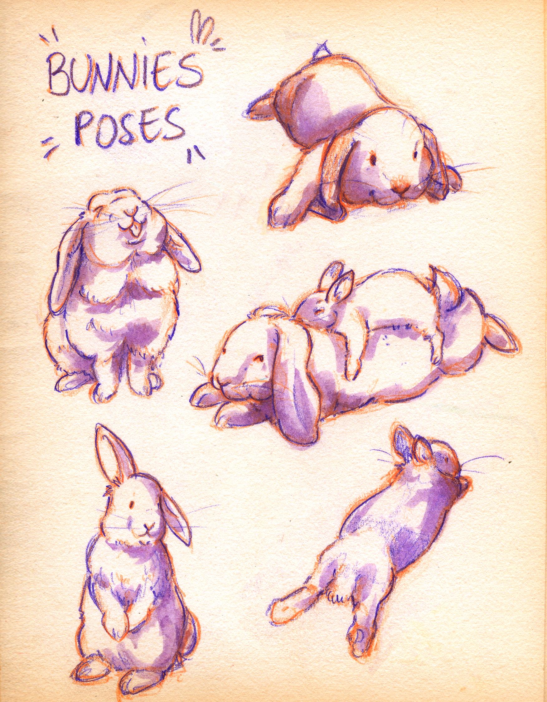 3.bunnycute