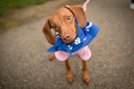 muncie indianapolis editorial nonprofit event dog photographer