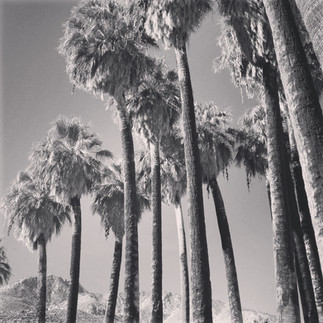 The Palms of Palm Springs.JPG