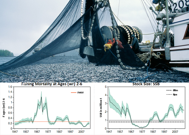 2 graphs herring
