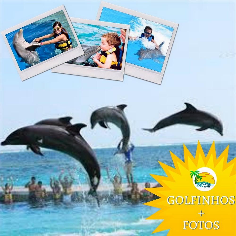 promoção nado com golfinhos