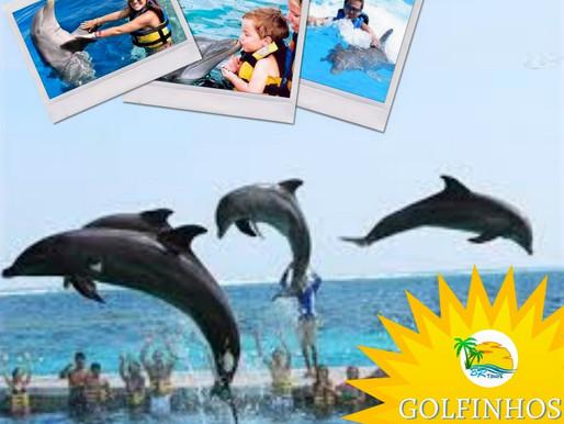 Novo parque dos golfinhos!