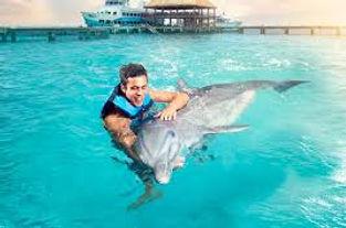 nado com golfinho cancun e riviera maya