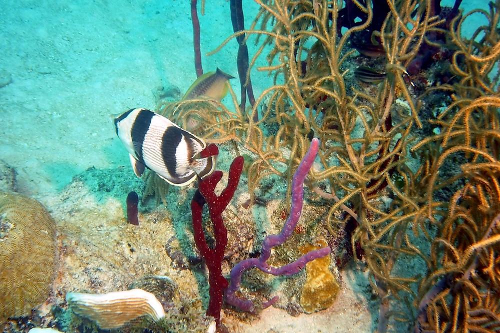 mergulho isla catalina