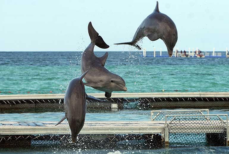 passeio golfinhos punta cana