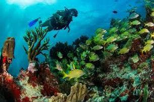 mergulho cancun riviera maya e cozumel