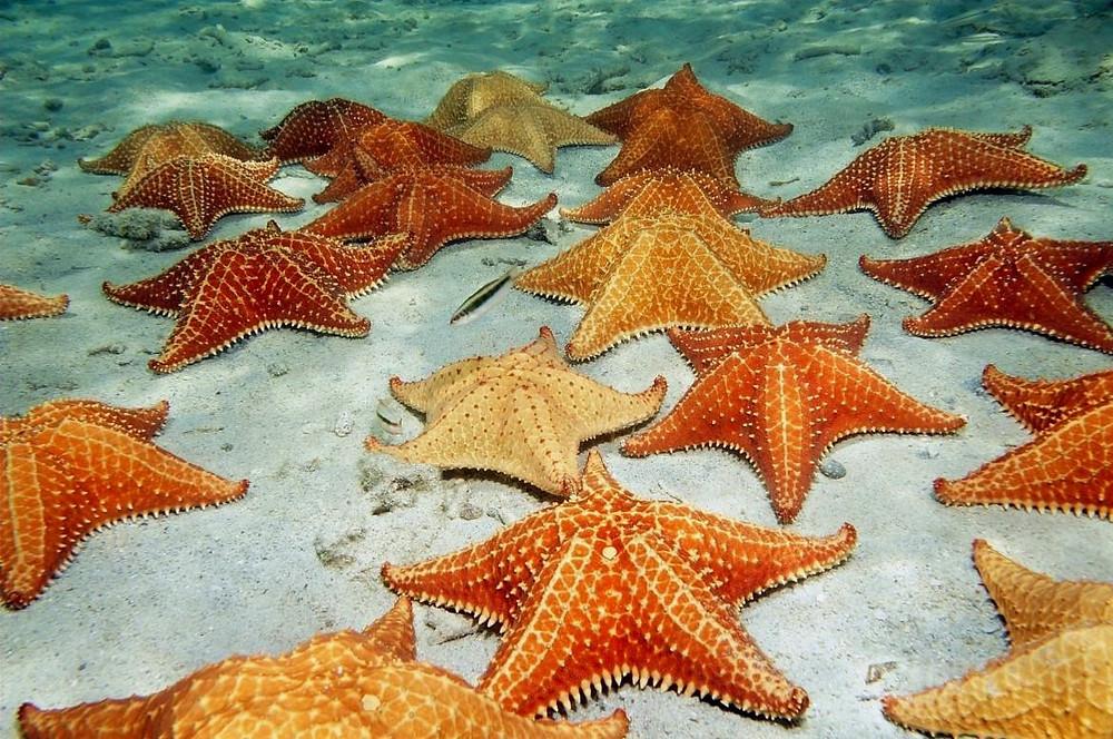 estrelas do mar passeio saona