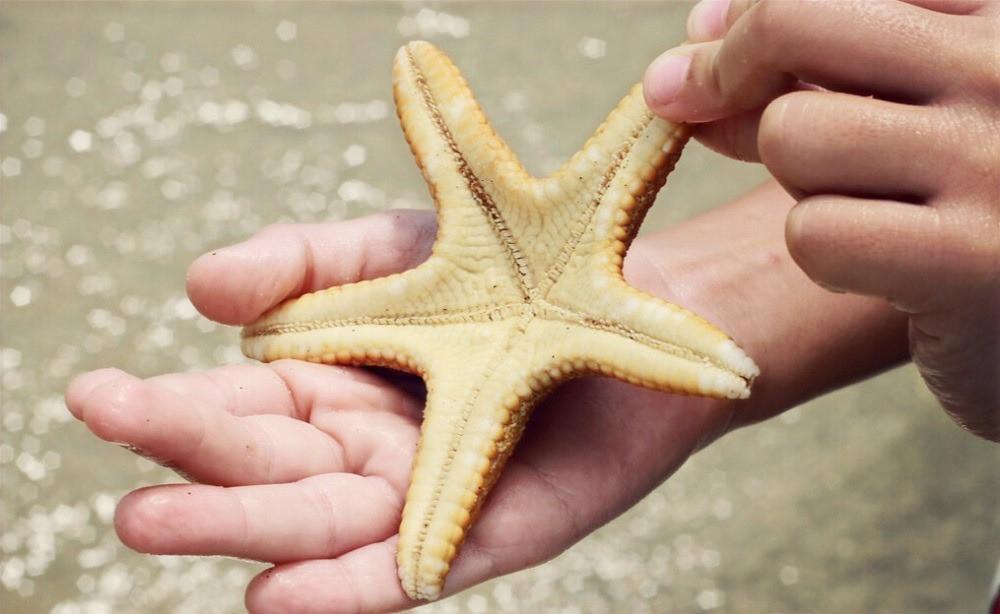 estrelas do mar isla saona