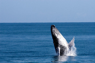 baleia punta cana