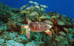 mergulho caribe