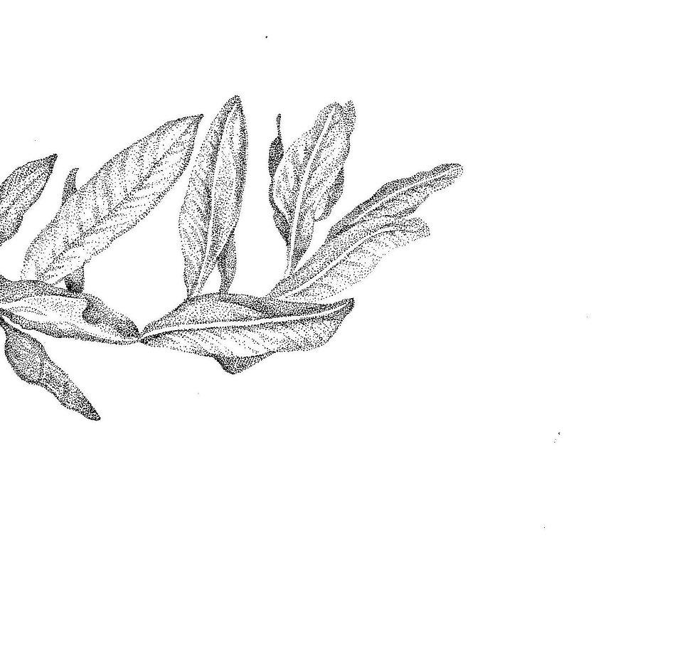 clean leaves_2.jpg