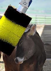 Confort animal, brosse à vache