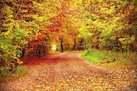 automne-10.jpg