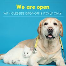Curb COVID-19 Social Kit V2_GP cat and d